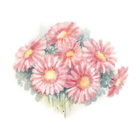 Pink Gerbera Hybrida. Bouquet of pink gerbera daisy flowers on white background. Watercolor Illustration. Greeting Card.