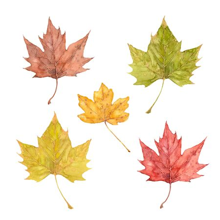 Set of red, yellow, orange and brown maple leaves on a white background. Watercolor illustration.