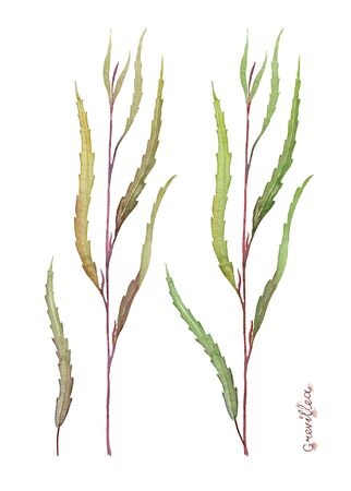 Leaves of Grevillea Natural. Greenery for bouquets, flower compositions and greeting cards. Watercolor illustration.