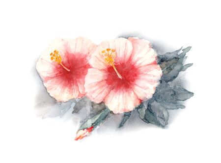 Rose of Sharon. Two red and white flowers of Hibiscus. Bush of rose mallow on a white background. Watercolor illustration. Imagens
