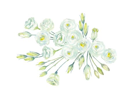 Eustoma. Lisianthus Rosita White. Bouquet of white flowers and buds on a white background. Prairie gentian of the gentian family. Watercolor illustration.