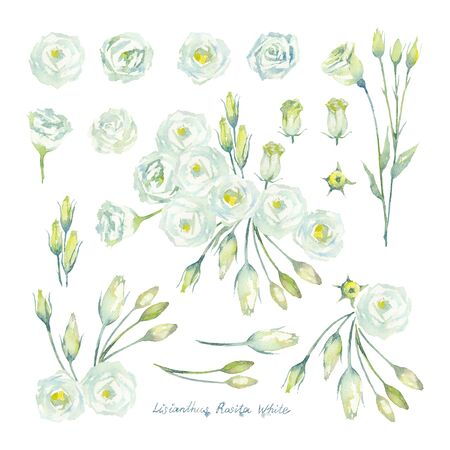 Lisianthus Rosita White. Set of Eustoma flowers and buds on a white background. Prairie gentian of the gentian family. Watercolor illustration.