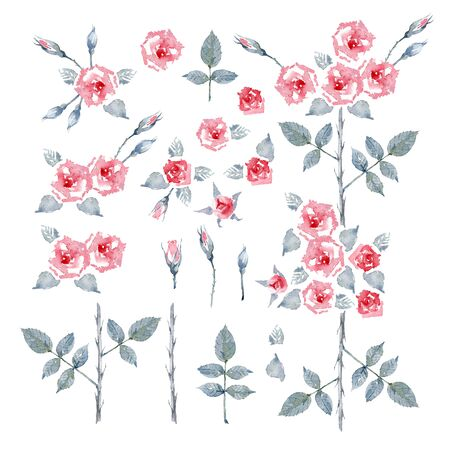 Climbing Rose Etoile de Hollande. Set of red English garden roses  flowers, leaves and buds on a white background. Frame for greeting card. Watercolor illustration. Banco de Imagens
