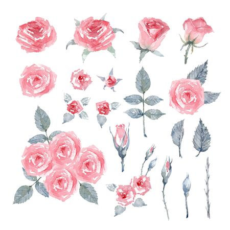 Rose Pink Love. Set of pink rose flowers, leaves and buds on a white background. Bouquet of Roses. Watercolor illustration. Imagens