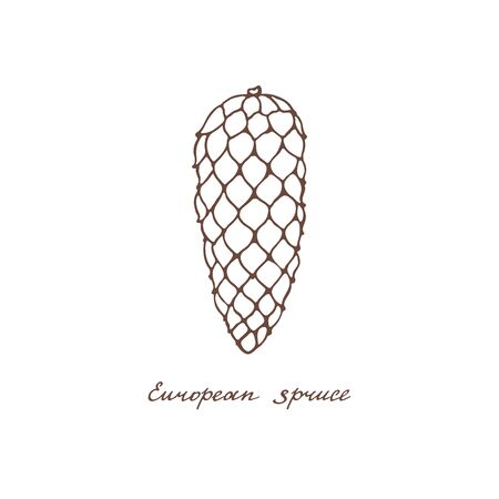 European spruce. Graphic cone of conifer trees on a white background. Vintage hand drawn collection of holiday decor and greeting cards. Vector illustration of winter symbols. Ilustração