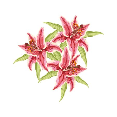 Three Pink-Red Lily. Flowers and leaves on a white background. Hand-drawn collection of greeting cards. Vector illustration. Ilustração
