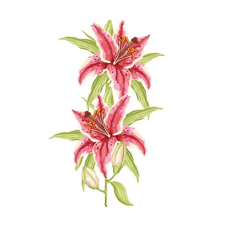 Pink-Red Lily. Branche with two flowers and buds on a white background. Hand-drawn collection greeting cards. Vector illustration.