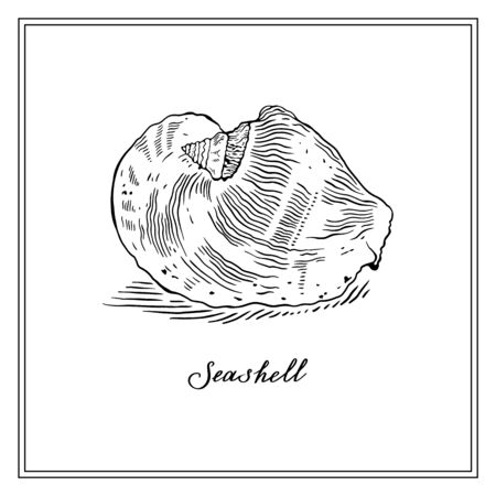 Big Seashell. Black and white square card. Seashells hand-drawn collection of greeting cards. Vector illustration on a white background.
