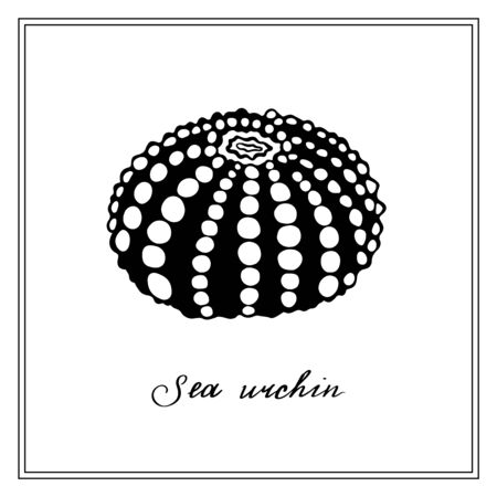 Big Black Sea Urchin with white dots. Seashell. Black and white square card. Hand-drawn collection of greeting cards. Vector illustration on a white background.