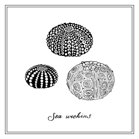 Three Sea Urchins. Seashell. Black and white square card. Hand-drawn collection of greeting cards. Vector illustration on a white background.