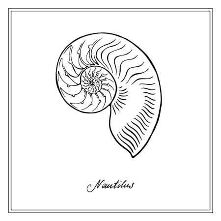Nautilus half-seashell. Black and white square card. Hand-Drawn collection of greeting cards. Vector illustration on a white background.