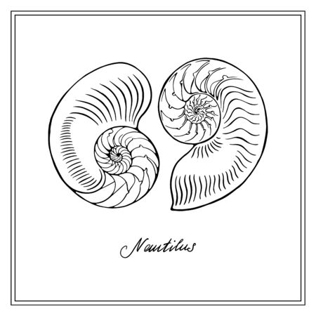 Two Nautilus Tiger Half-shell. Black and white square card. Hand-вrawn collection of greeting cards. Vector illustration on a white background.