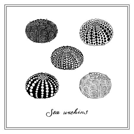 Set of Five Sea Urchins. Seashell. Black and white square card. Hand-drawn collection of greeting cards. Vector illustration on a white background.
