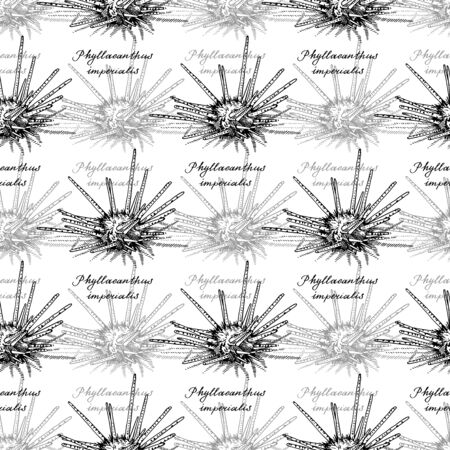 Sputnik urchin. Seamless pattern of Phyllacanthus imperialis and calligraphy. Hand-drawn collection of greeting cards. Vector illustration on a white background.