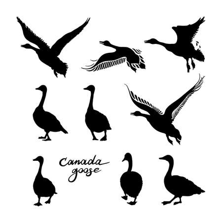 Canadian geese silhouettes. Black and white big set of birds. Vintage collection. Vector illustration on a white background.
