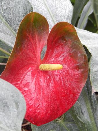 Botanical garden, greenhouse, flowering of flowers