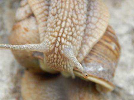 gastropod: snail crawling the green grass in garden