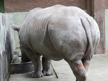 White rhino in aviary details