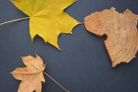 Autumn texture of yellow maple leaves on a black background Stok Fotoğraf