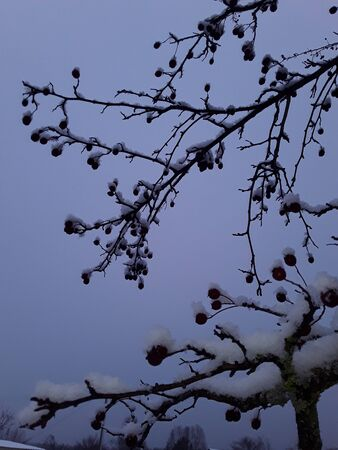 Snow-covered trees and branches covered in winter first snow