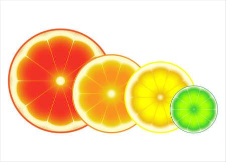Fresh ripe sliced citrus fruits: grapefruit, orange, lemon, lime. Isolated on white background, vector illustration