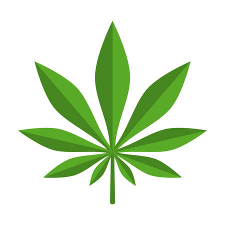 Cannabis leaf icon. Isolated green sign on white background. Vector illustration
