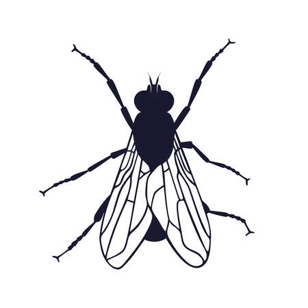 Fly icon. Fly graphic symbol isolated on white background. Vector illustration