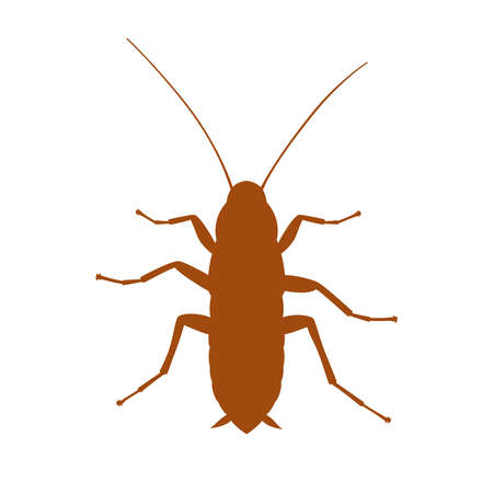 Cockroach graphic sign. Cockroach silhouette close up isolated on white background. Vector illustration