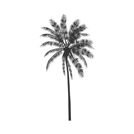 Palm tree icon. Tropical palm sign isolated on white background. Detailed symbol. Vector illustration Illusztráció