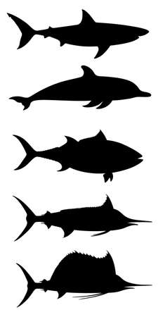 Sea fishes graphic icons set. Shark, dolphin, tuna, marlin, sailfish, symbols isolated on white background. Vector illustration