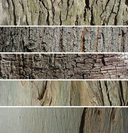 Banner set tree trunk