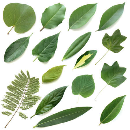 Isolated leaves branches bush set IV Stock Photo