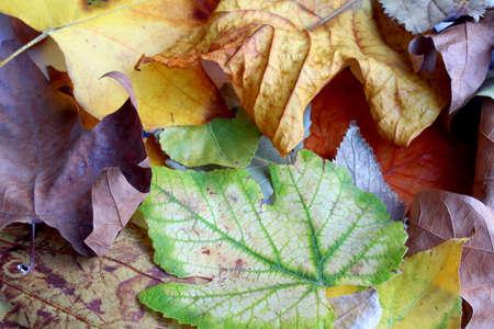 Autumn dry leaves huddle background