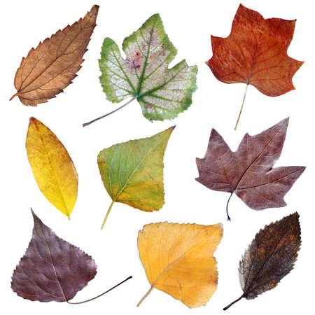 Autumn dry leaves set I Stock Photo