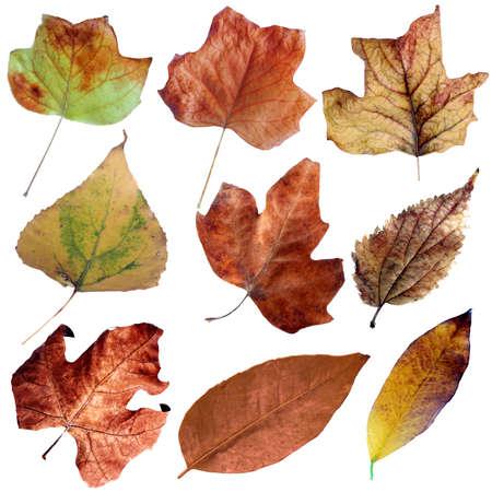 Autumn dry leaves set II