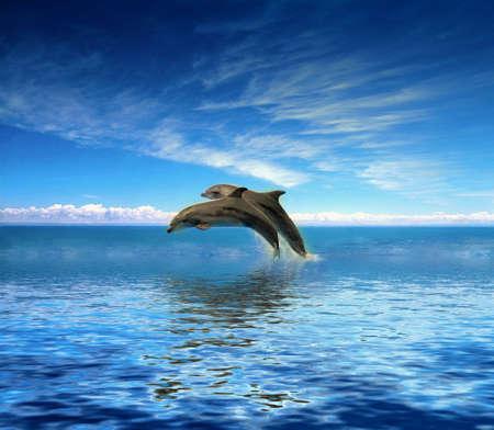delfin: Delfiny