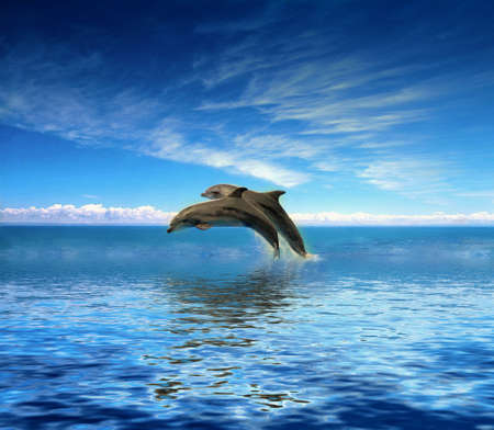 dolphin: Dolfijnen