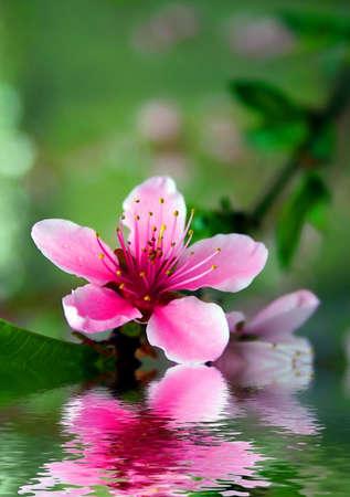 Flowers photo