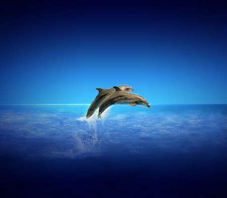 delfin: Dolphins Zdjęcie Seryjne