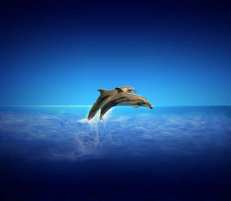 Dolphins Archivio Fotografico
