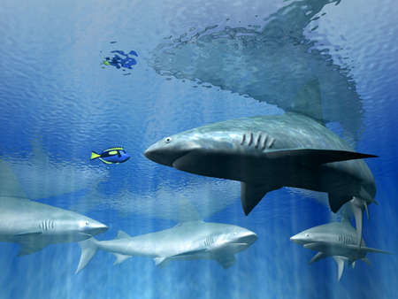 poco: los tiburones
