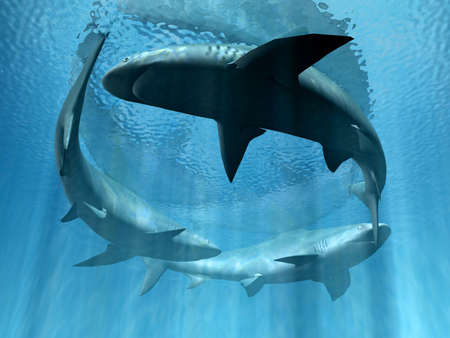 single fin: sharks  Stock Photo