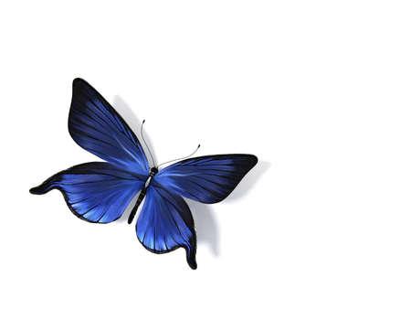 eyespot: Butterfly