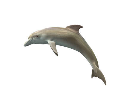 Dolphin isolated on a white background photo