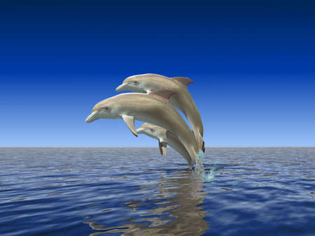 creatures: Dolphins