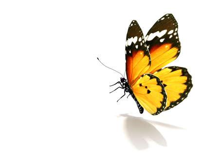 Geïsoleerde Butterfly