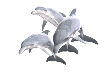HI res Dolphins isolated on a white background  photo