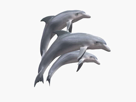 res: HI res Dolphins isolated on a white background