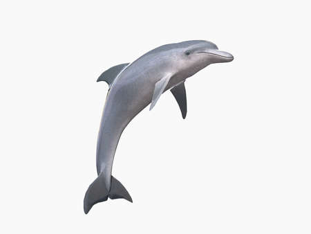 dolphin: HI res Dolphin isolated on a white background