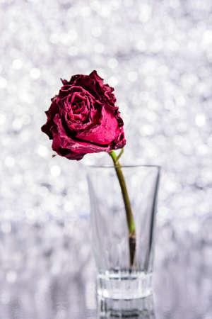 wilting: Dead Rose Stock Photo